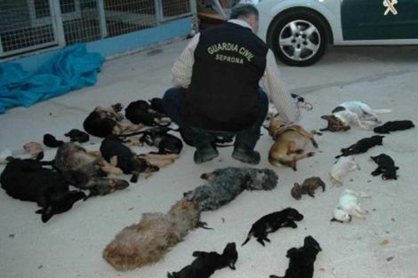 Un agente del Seprona junto a cadáveres de perros. | ELMUNDO.es