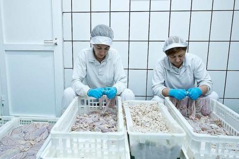 Dos trabajadoras seleccionan y limpian de sebo los estómagos. | Photogenic / M. A. Santos