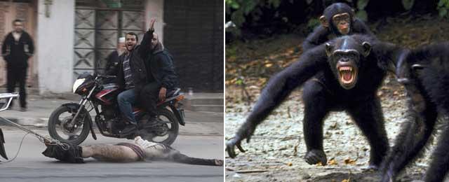 Violencia entre humanos en las calles de Gaza, y una agresión entre chimpancés. | Efe/OSF