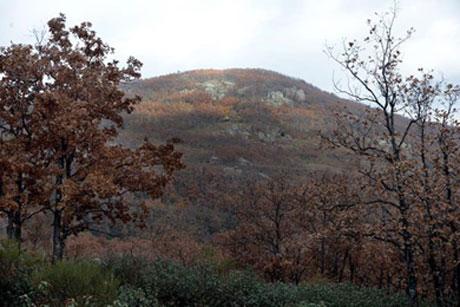 El cerro de la Golondrina entre los melojos.  Marga Estebaranz