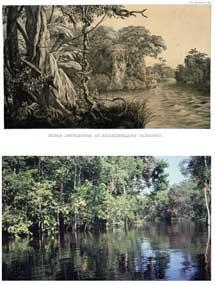 Arriba, litografía de la Amazonia. Abajo, imagen actual. | FAPESP
