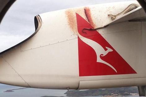 La serpiente, en el ala del avión. | Afp
