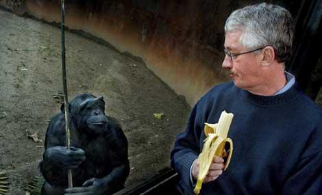 El primatólogo Frans de Waal junto a un chimpancé en una visita a Barcelona. | Xavier Cervera.