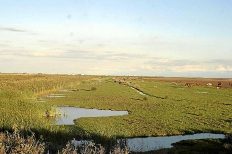 Una de las zonas del Parque Nacional de Doñana. | EL MUNDO
