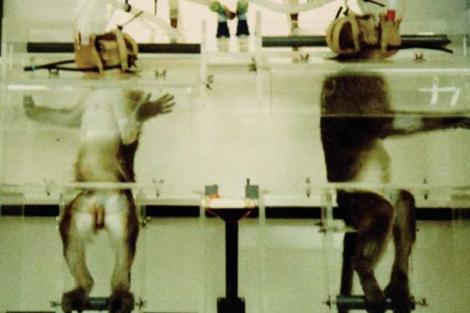 Monos usados en un laboratorio de Reino Unido.   BUAV/ECEAE