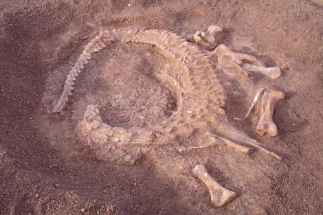 El fósil, en el lugar en el que fue hallado, en Níger. | E.M.