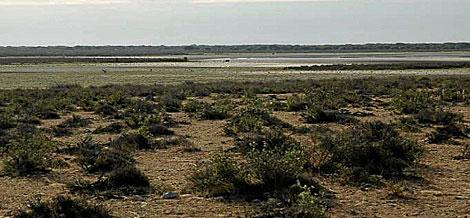 La laguna de Santa Olalla, seca.   Foto cedida por WWF