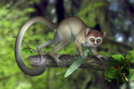 Reconstrucción artística del primate hallado en China. | Nature