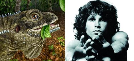 El lagarto 'morrisoni' fue nombrado así en homenaje a Jim Morrison. | E.M.