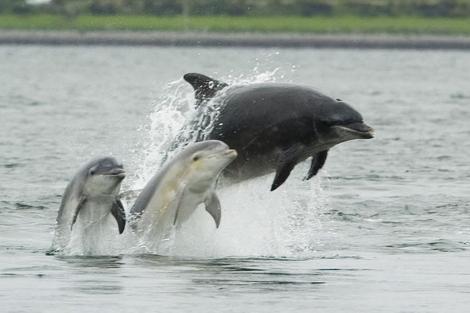 Un grupo de delfines nariz de botella. | EM