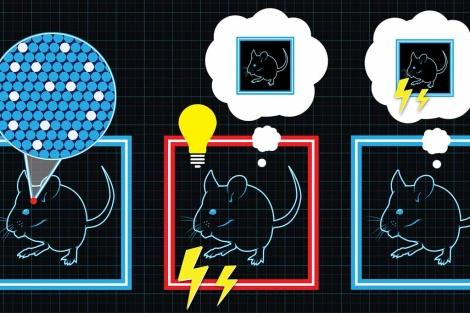 Recreación artística del experimento en ratones. | MIT
