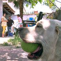 Furby, antiguo perro de la Policía Nacional