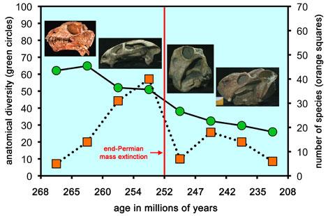 Evolución de varias especies de anomodontos halladas en Rusia, Zambia y Sudáfrica.   Museo de Historia Natural Field.