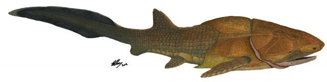'Entelognathus primordialis', ya extinto, medía unos 20 centímetros de longitud.| Brian Choo