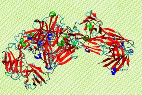 Simulación del proceso de adsorción de un anticuerpo (IgG) sobre grafeno. | Pedro A. Serena