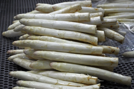 Espárragos blancos listos para su envasado y distribución. | El Mundo