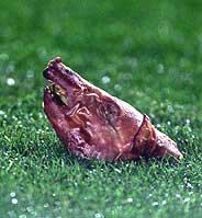 La cabeza de cochinillo lanzada al Camp Nou. (Foto: AS)
