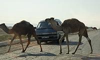 MOSCÚ, KIEV o ESTAMBUL - SAMARKANDA. Procedentes del desierto de Turkmenistán, bien del Mar de Aral o de los bosques rusos, la mítica ciudad de Samarkanda, eje comercial de la desaparecida Ruta de la Seda, es punto de encuentro para toda la caravana. Fotografía Stephen Edwards.