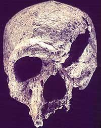 Vista frontal del cráneo de 'Steiheim'