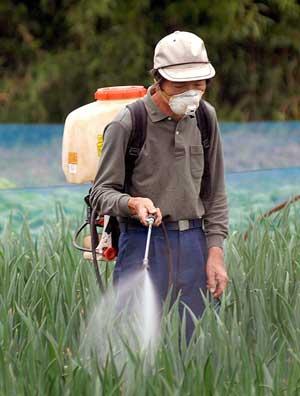 Un agricultor rocía con pesticida un cultivo de arroz en Chiba, Japón. (Foto: EFE | Andy Rain)