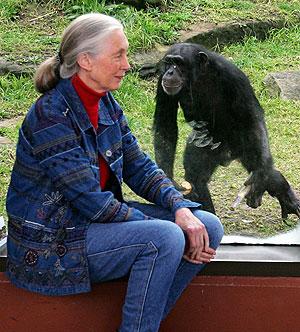 La primatóloga Jane Goodall junto con un chimpancé (Foto: David Gray|Reuters)
