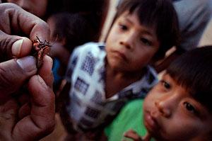 Niños bolivianos observan dos vinchucas, transmisoras de la enfermedad. (Foto: Christian Lombardi)