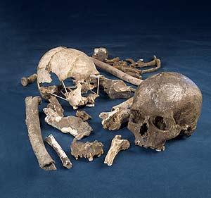 Cráneo de 'Homo sapiens'. (Foto: Nature)