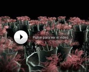 Imágenes de una células olfativas. (National Geographic Channel)