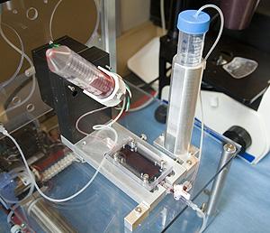 La sangre fluye por el dispositivo hasta llegar al chip, con forma de rectángulo (Foto: MGH)