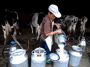 Un granjero vierte leche en unos recipientes (Foto: EFE | Wu Hong)