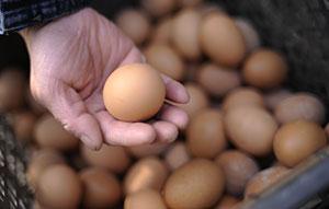 Hong Kong ha detectado melamina en tres lotes de huevos chinos. (Foto: Peter Parks | AFP)