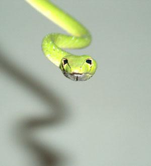 Serpiente en una exposición de Cosmocaixa (Foto: El Mundo)
