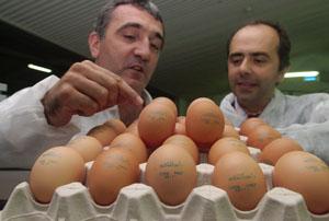 Huevos con número de referencia y fecha de caducidad. (foto: El Mundo)