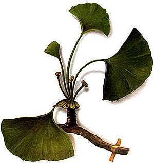 Imagen de la planta en cuestión (Foto: El Mundo)