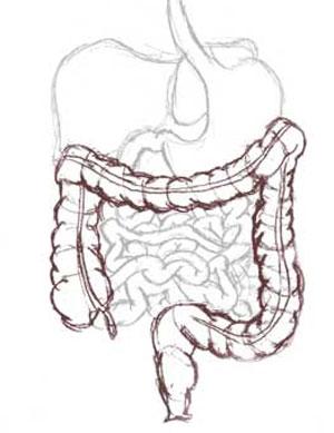 Imagen del intestino grueso. (El Mundo)