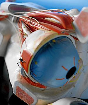 Maqueta de un ojo humano (Foto: El Mundo)