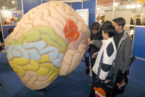 Unos niños aprenden cómo funciona el cerebreo el Feria de las Ciencias. | Diego Sinova.