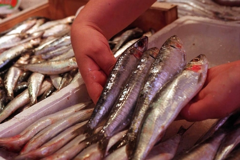 Las sardinas son ricas en ácidos grasos omega-3. | Foto: Pedro Carrero