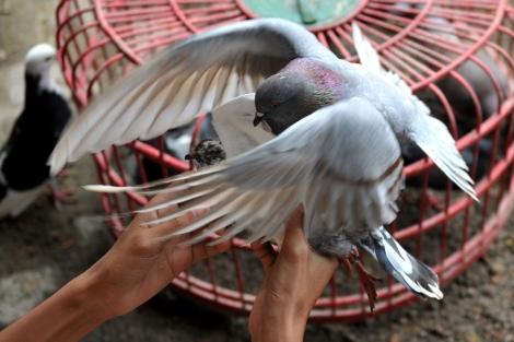El virus H5N1 se contagia de animales a humanos. | Afp