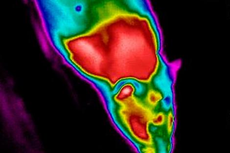 rata de arsură a grăsimilor corporale cel mai sigur arzător de grăsimi
