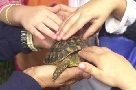 Varios niños acarician una tortuga.| El Mundo