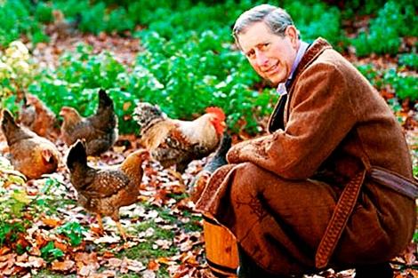 Carlos de Inglaterra agachado junto a unas gallinas