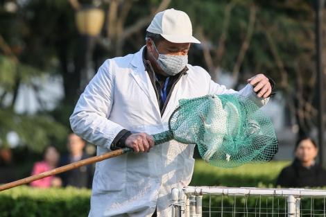 Hong Kong entra en alerta ante la propagación de la gripe aviar H7N9 en el este de China