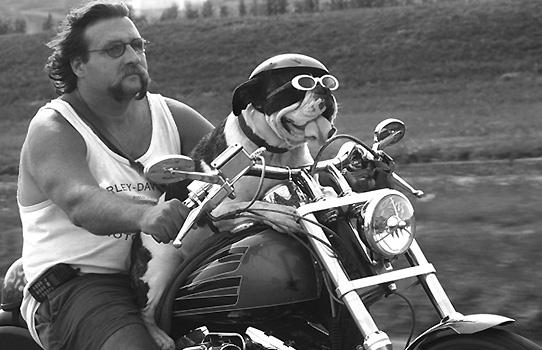 Hay experiencias que sólo se pueden sentir a lomos de una Harley-Davidson. La celebración de 'los Coyotes', el 31 de agosto en Málaga, arrastra a miles de fanáticos embrujados por uno de los movimientos más carismáticos e influyentes de nuestra historia más reciente. Conoce su espíritu.