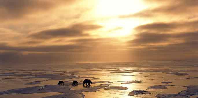 Osos polares caminando sobre un glaciar del Ártico