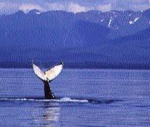 El Edén de las ballenas