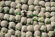 Un hombre descansa sobre unos fardos de algodón en Costa de Marfil