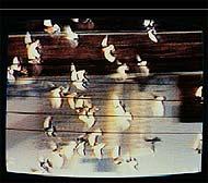 Imagen de un vídeo de la artista Eugènia Balcells.