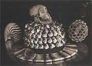 'Bonito, Calavera y Sombrero', de Michico Kon.