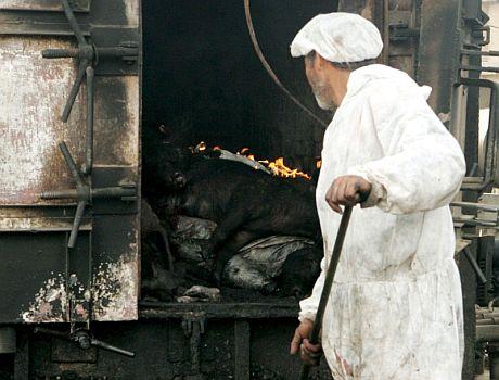 Quema de cerdos en un matadero de El Cairo, Egipto. | Efe